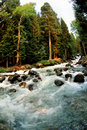 River rapids in forest