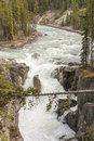 River rapids in mountain valley fast moving forms into waterfall along pine tree Royalty Free Stock Photography