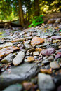 River Rocks with Blurred Background