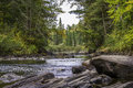 River Running Through a Forest in Early Fall Royalty Free Stock Photo