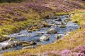 River Running through a scottish heather glen Royalty Free Stock Photo