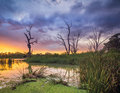 River s edge the murray in south australia Stock Images