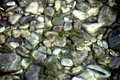 River Stones In River Water. P...