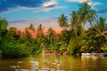 River,  sunrise and tropical palms Royalty Free Stock Photo