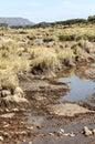 River In Tanzania