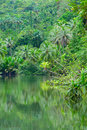 River in tropical rainforest Stock Photography