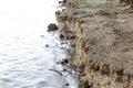 Riverbank close up at the lake Stock Image
