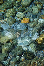 Riverbed through the clear water flowing. Royalty Free Stock Photography