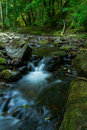 Riverbed at Summertime Royalty Free Stock Photo