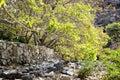 Riverbed wadi bani habib image of in oman Stock Photos
