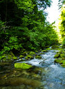 Riverway Overgrow With Green Paint in Mountain Royalty Free Stock Photos