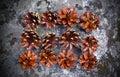 Rożków sosny skała Fotografia Royalty Free