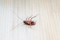 Roach dead on wooden floor for use as a pest control concept. Royalty Free Stock Photo