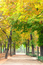 Road along autumnal trees scenic shot of country Royalty Free Stock Photography