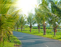Road along the palm trees of the tropics sunlight through the forest Royalty Free Stock Photo