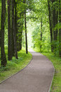 The road along the woods. Royalty Free Stock Photo