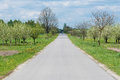 Road alongside orchard trees an Royalty Free Stock Photo