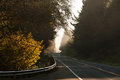 Road america a minor through pine forests in washington state early morning fog creates an ethereal look along with golden autumn Stock Image