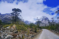 Road Amidst Snowcapped Mountai...