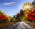 Road, asphalt, autumn Royalty Free Stock Photo