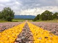 The road asphalt in colorado heading to mountains Stock Photos