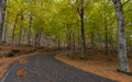 Road Among The Autumn Beech Fo...