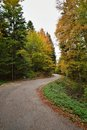 Road in autumn forest with colorful leaves on trees and curved Royalty Free Stock Image
