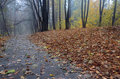 Road through autumn forest after rain Royalty Free Stock Photo