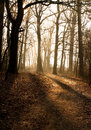 Road in the autumn forest warm light from back Royalty Free Stock Photo