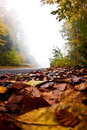 Road with autumn leaves, Olympus mountain, Greece Royalty Free Stock Photos