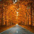 Road in autumn woods Royalty Free Stock Photo