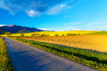 Road in a beautiful land with meadows and blooming field. And snow mountain in background. Slovakia, Central Europe
