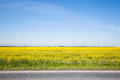 Road and beautiful yellow field