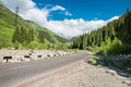 Road on big almaty lake nature green mountains and blue sky in almaty kazakhstan asia at summer Royalty Free Stock Image
