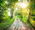 Road in a birch forest the magic sunny day Stock Photos