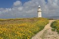 Road through the blooming field to the lighthouse cyprus paphos Stock Photos