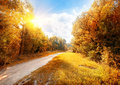 Road in a colorful autumn forest at sunny day Royalty Free Stock Photo