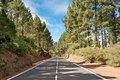 Road in coniferous forest, Spain Royalty Free Stock Photos