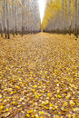 Road covered with leaves in a tree farm autumn cover country Stock Photography