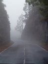 Road covered in mist Stock Image