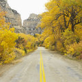Road cutting through Aspen trees. Royalty Free Stock Photography