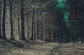 Road through dark forest in autumn Royalty Free Stock Photo