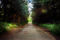Road in dark forest Royalty Free Stock Photo
