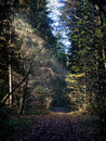 Road in a dark forest sunbeam streaming through the bowl of the thick Royalty Free Stock Photo
