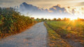 Road at dawn dirt in alghero sardinia Royalty Free Stock Photo