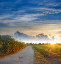 Road at dawn dirt in alghero sardinia Stock Photography