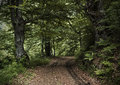 Road in deep green forest Stock Photo