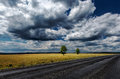 Road field sky trees Stock Image