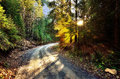 Road through the fir forest empty in mountain Royalty Free Stock Image