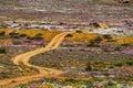 Road in flower field Stock Image